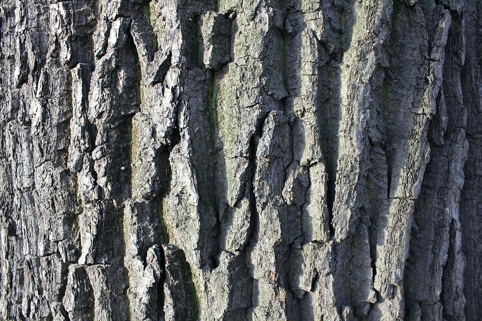 960x640 Wood Bark Texture Bark Tree Trunk Tree Bark Texture Trees Nature