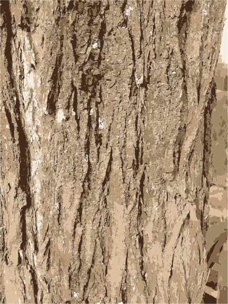 450x600 Collection Of Free Vector Texture Tree Bark. Download On Ubisafe