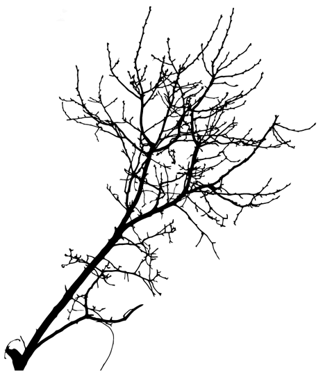 465x549 Easter Baking, Free Vector Tree Branch