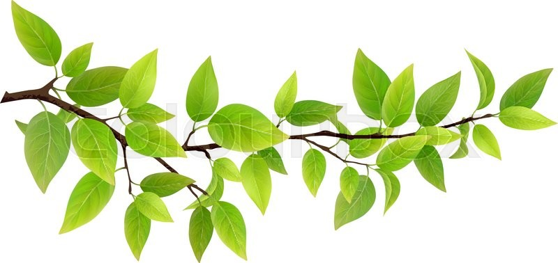 800x378 Small Tree Branch With Green Leaves. Detailed Vector Plant
