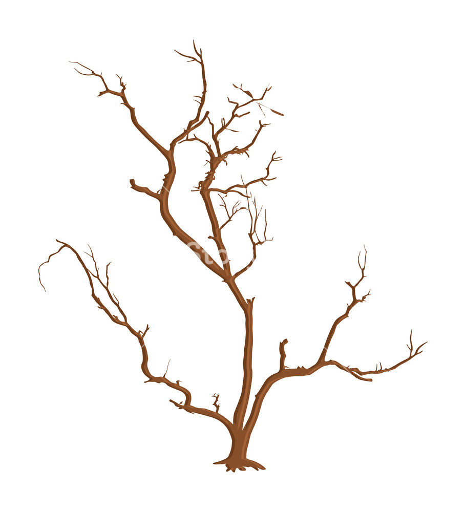 910x1000 Spooky Dead Tree Branches Vector Royalty Free Stock Image