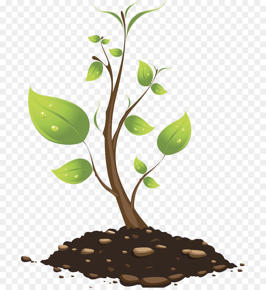 900x980 Tree Branch Euclidean Vector Plant