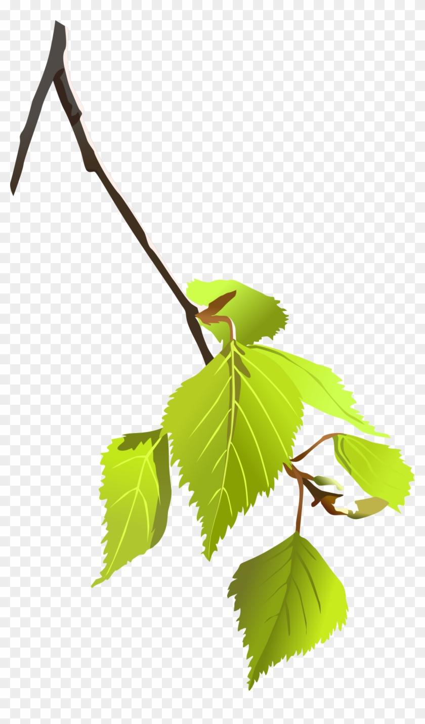 840x1431 Birch Tree Branch Clipart