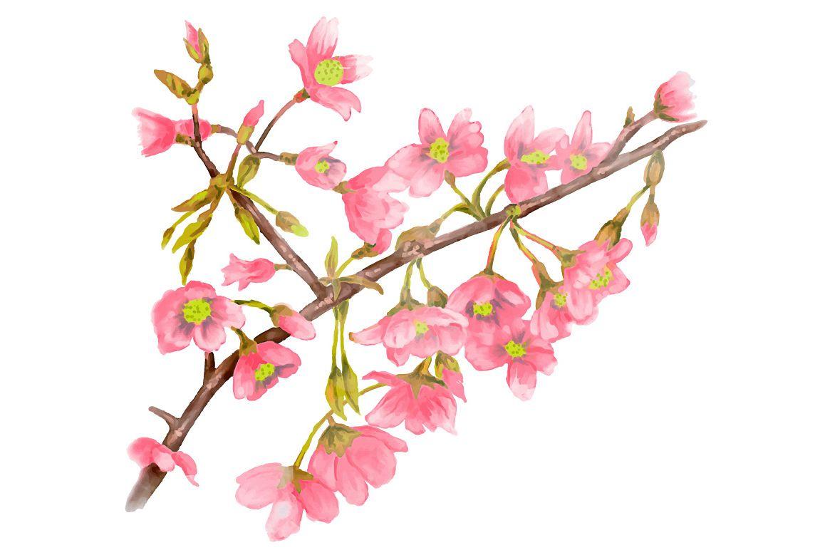 1158x772 Watercolor Spring Tree Branch Vector