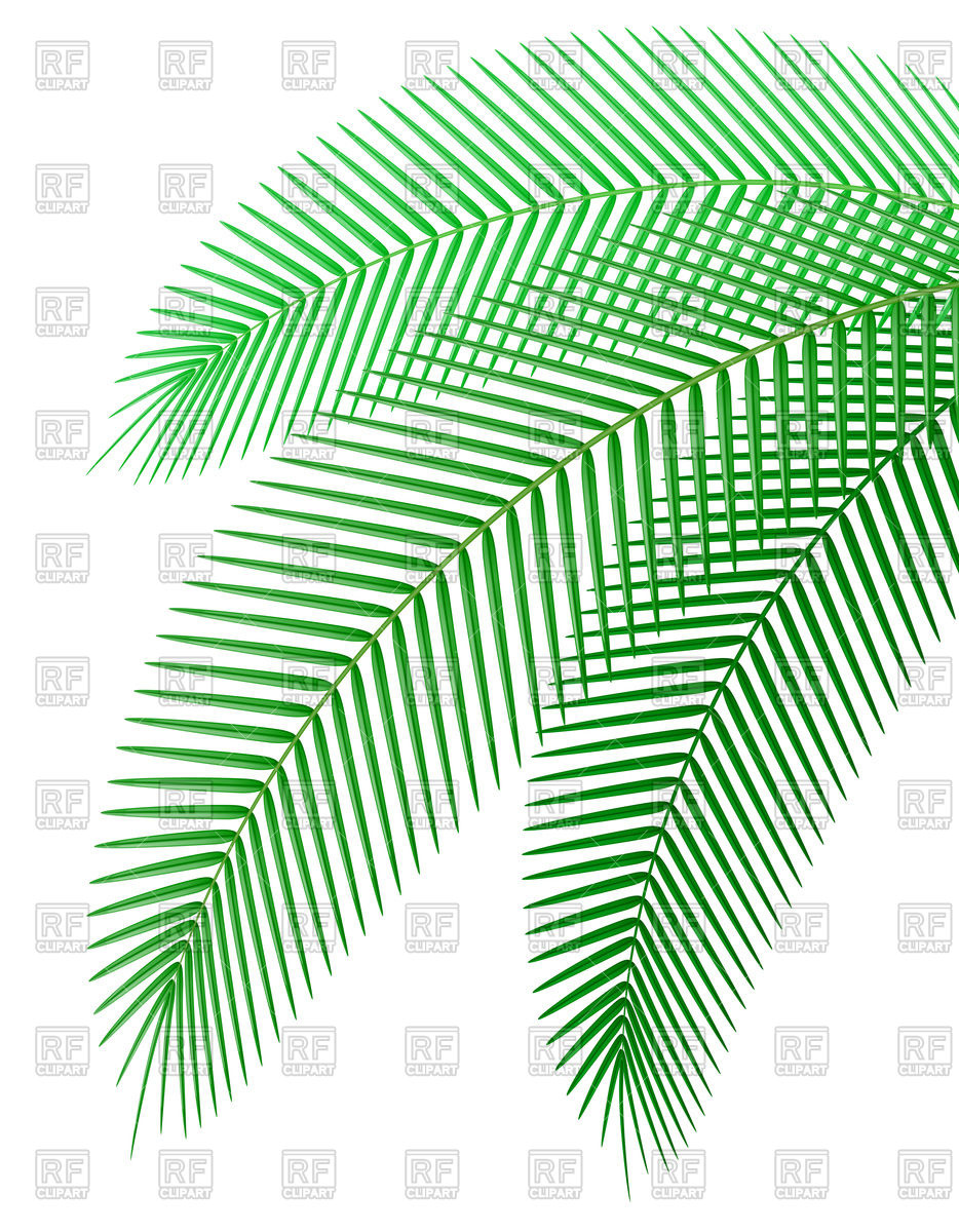 934x1200 Palm Tree Branch Vector Image Vector Artwork Of Plants And