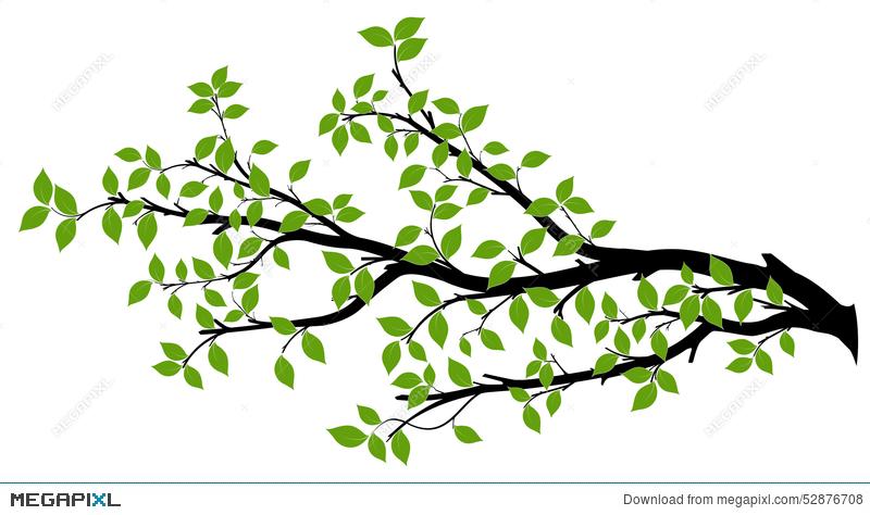 800x474 Tree Branch Silhouette, Vector Graphics Illustration 52876708