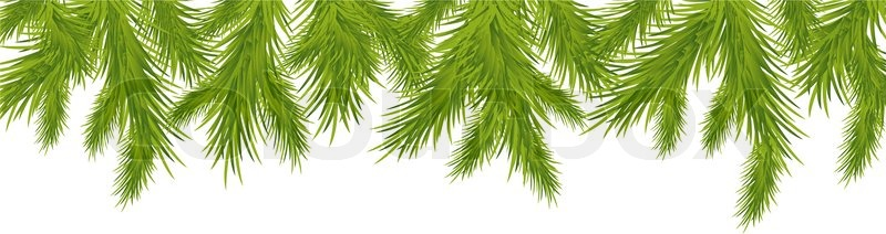 800x212 Branch Of Christmas Tree, Isolated On White Background, Vector