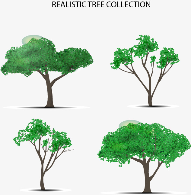 633x649 Hand Painted Trees, Drawing Trees, Greenery, Four Trees Png And