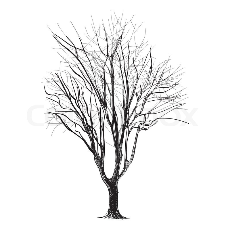 800x800 Large Bare Tree Without Leaves