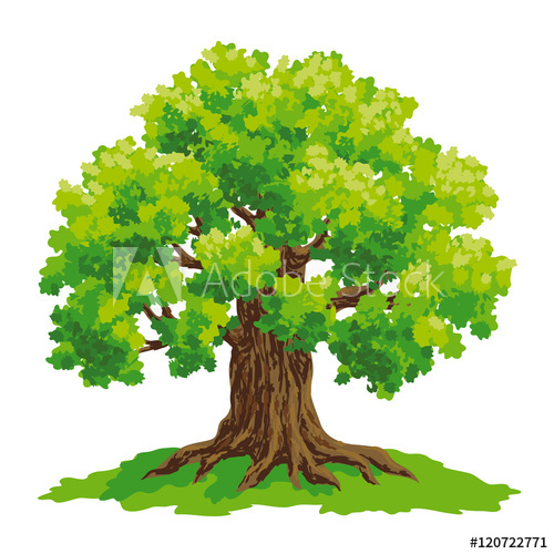 500x500 Oak Tree