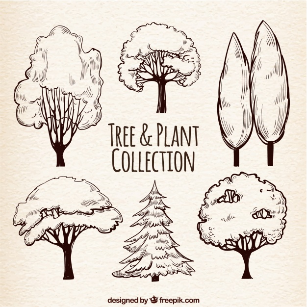 626x626 Set Of Tree Sketches Vector Free Download