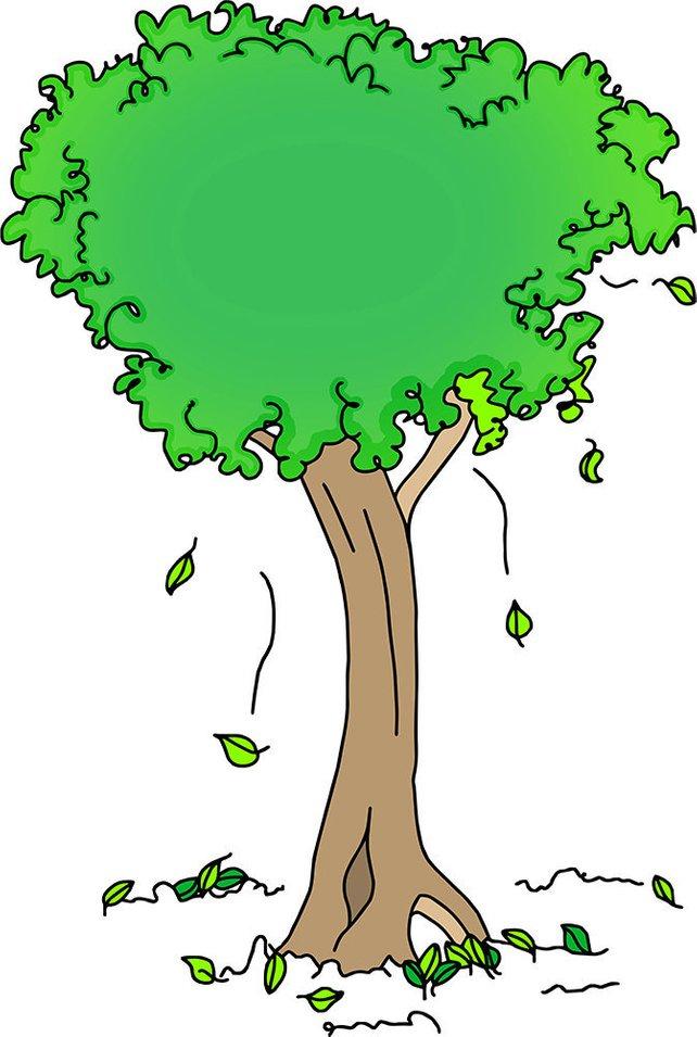 642x955 Tree Drawing Vector Art Illustration Pvc Board Print Green Etsy