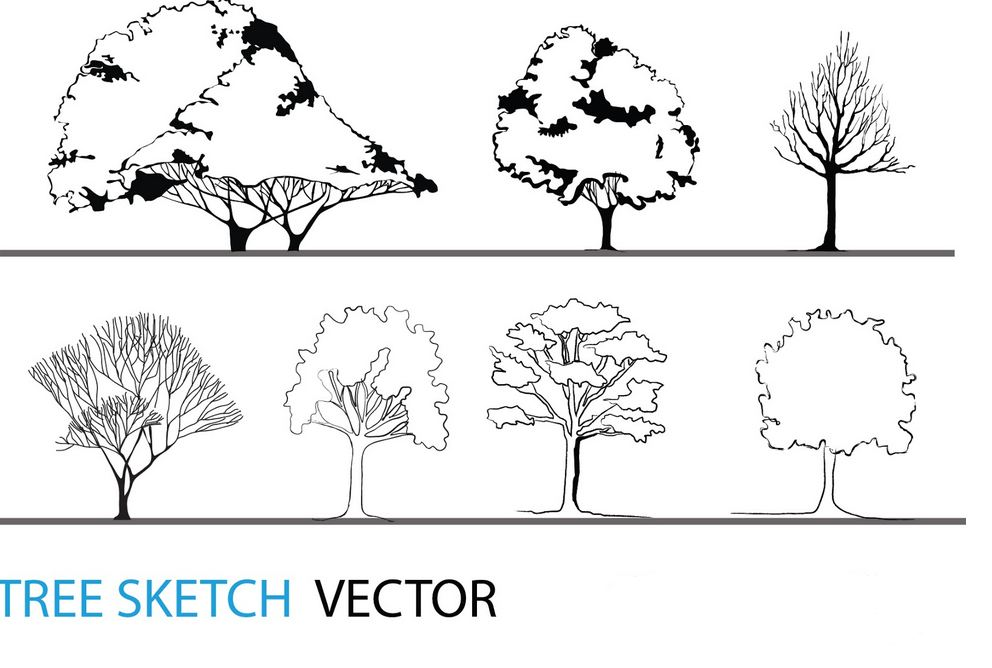 992x668 Tree Sketch Vector Architectural Resources Arch