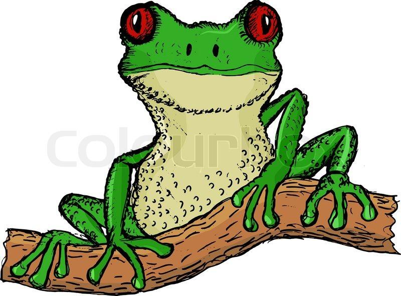 800x591 Hand Drawn, Vector, Cartoon Illustration Of Tree Frog Stock
