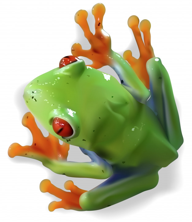 626x726 Red Eyed Tree Frog Vector Premium Download