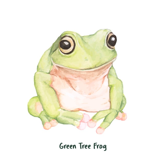 626x626 Tree Frog Vectors, Photos And Psd Files Free Download