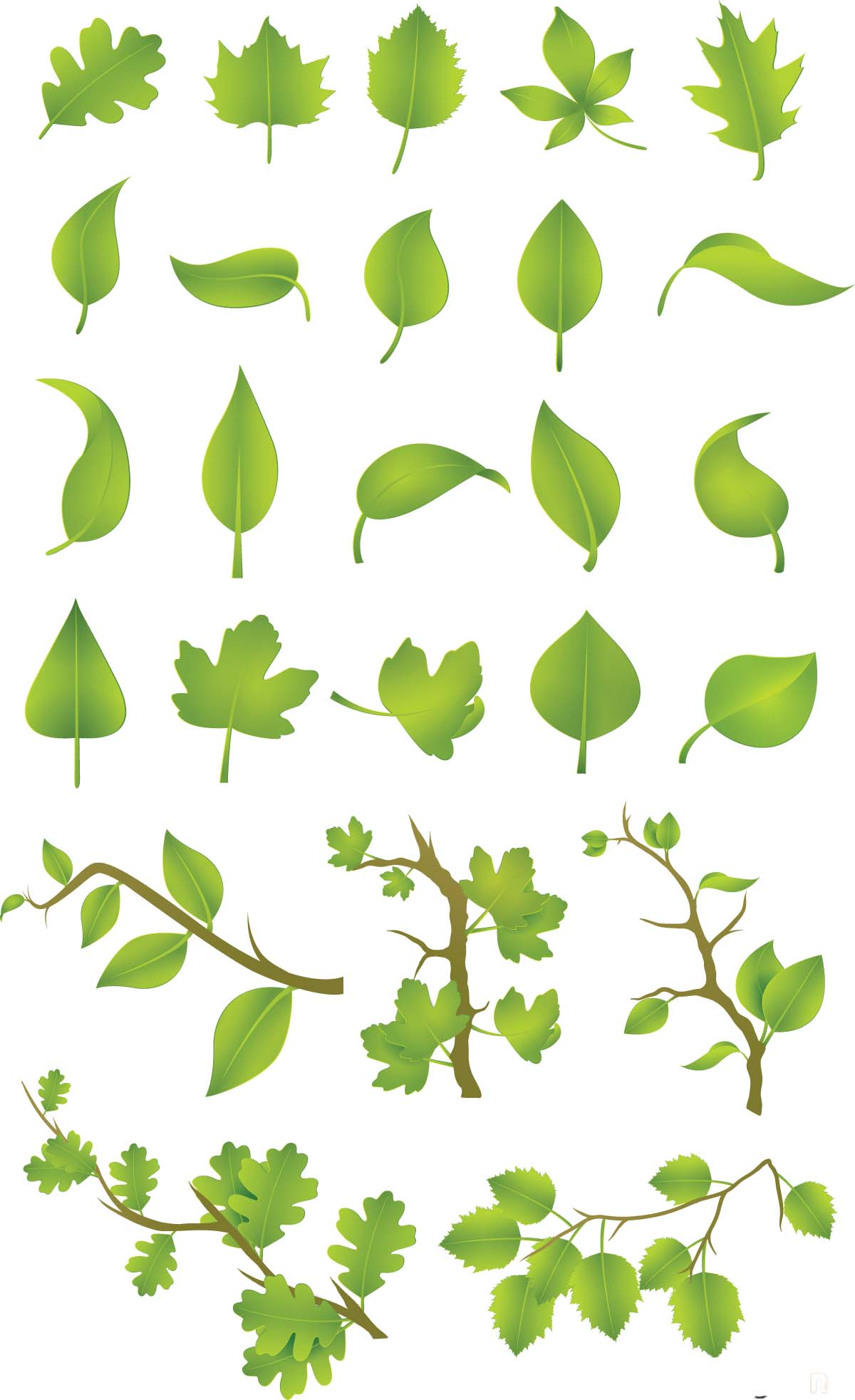 1200x1965 Green Leaves Vector Set Free Download