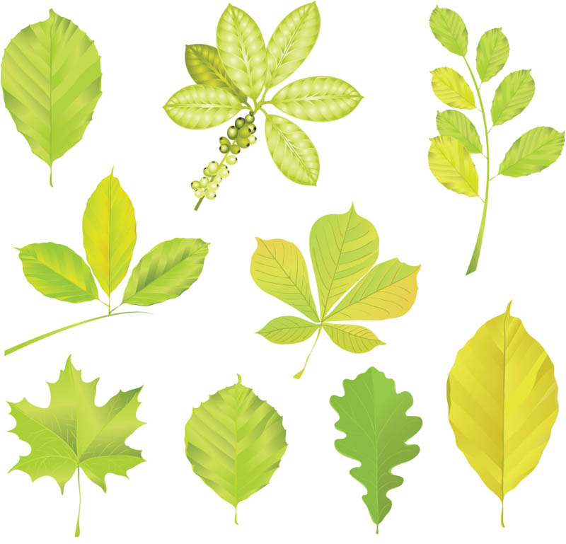 800x769 Green Tree Leaves Vector Vector Graphics Blog
