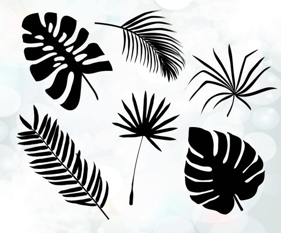 570x473 Palm Leaves Cuttable Design Tree Leaves Svg Tropical Svg Etsy
