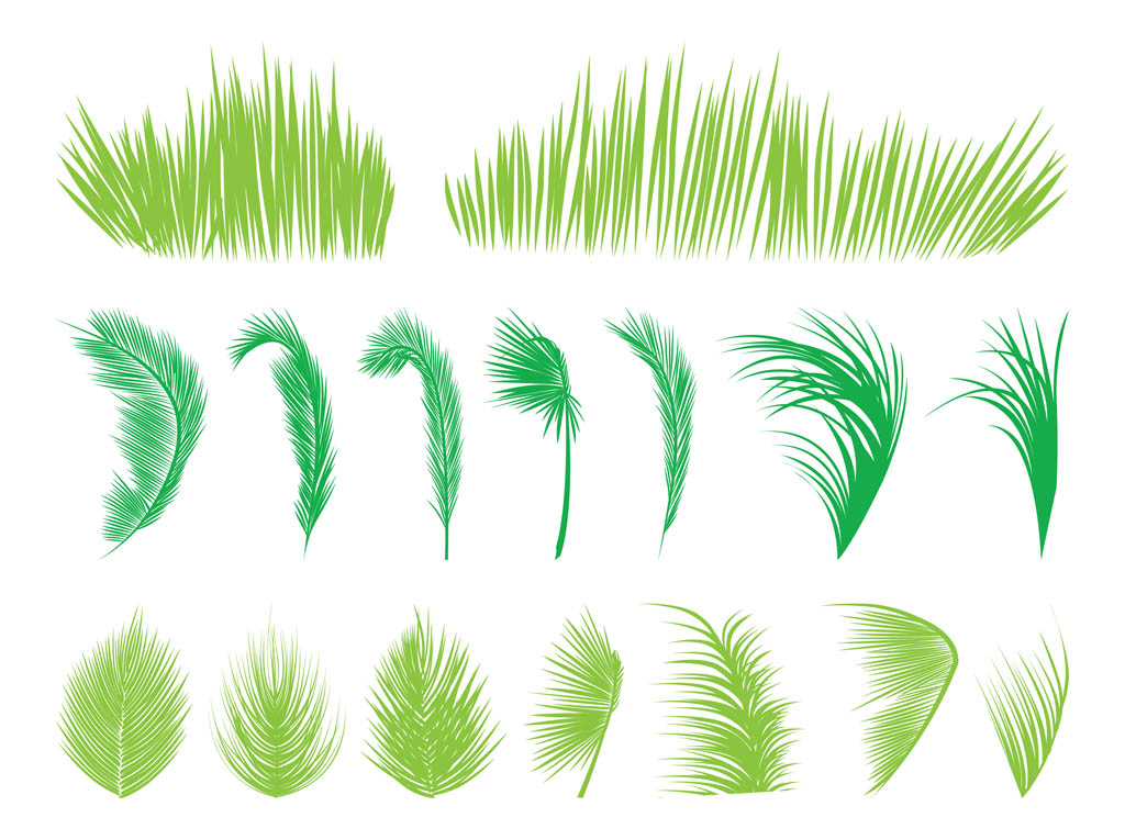 1024x765 Palm Tree Leaves Vector Art Amp Graphics