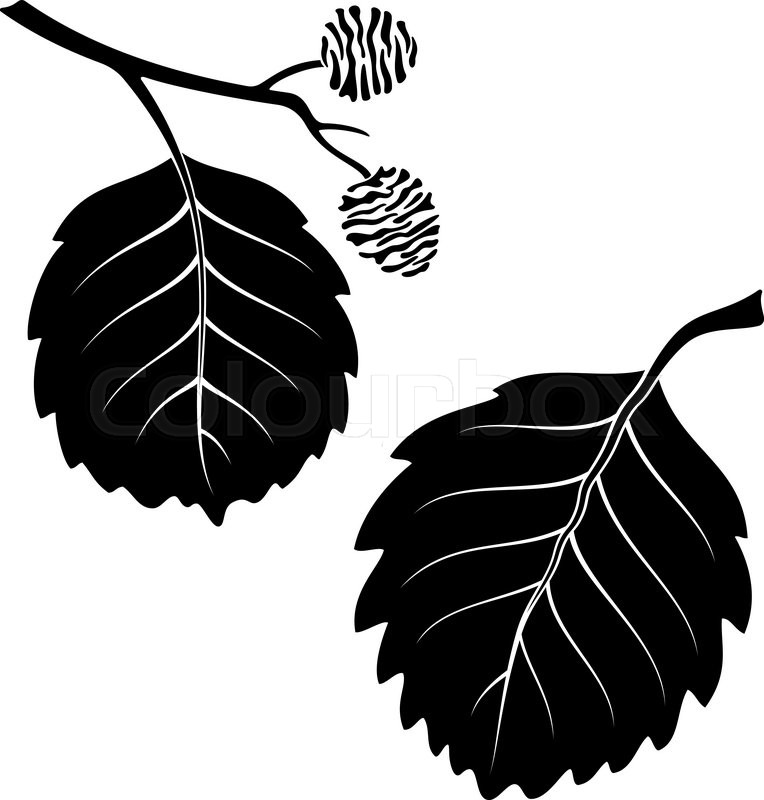 764x800 Set Of Plant Pictograms, Alder Tree Leaves, Black On White. Vector