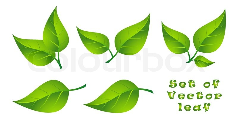 800x409 Set Of Vector Leaf Stock Vector Colourbox