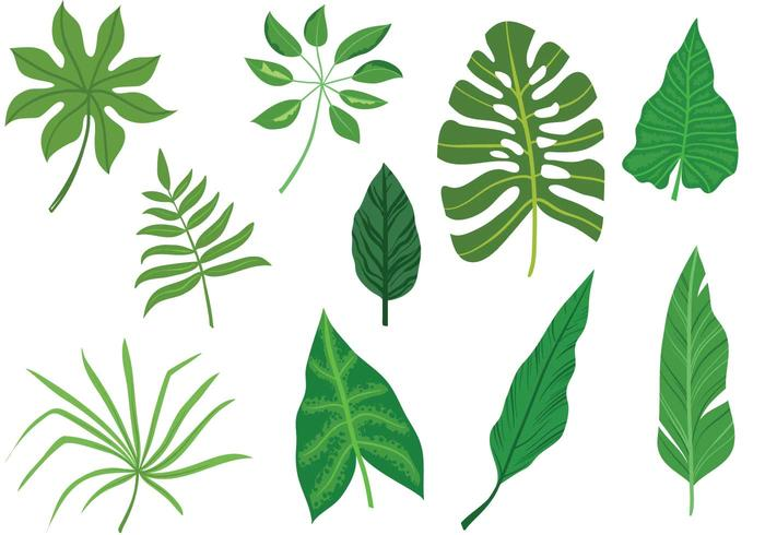 700x490 Tropical Leaves Vectors