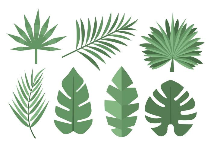700x490 Tropical Palm Leaves Vector