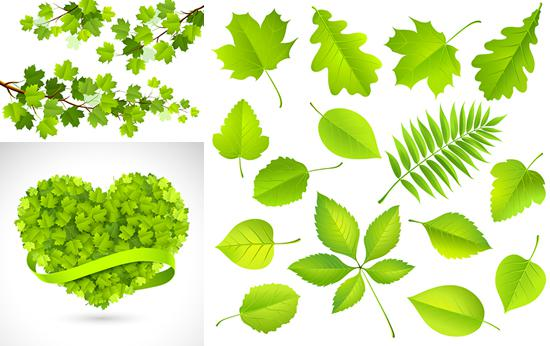 550x346 Green Tree Branch Vector [Eps]