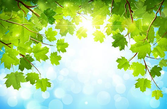 550x359 Green Tree Leaves Vector [Ai]