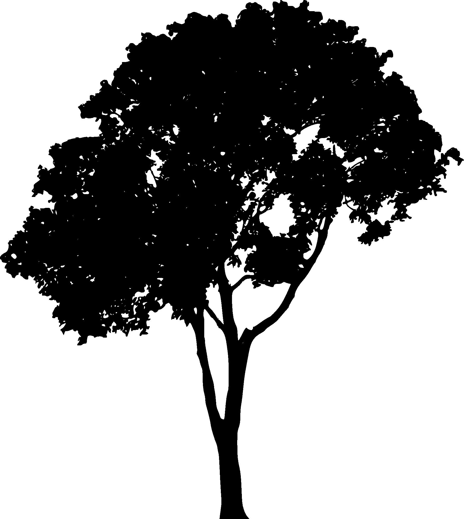 1788x2000 15 Outline Vector Tree For Free Download On Mbtskoudsalg