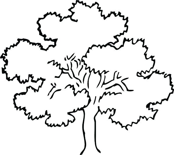 600x533 Oak Tree Coloring Pages Tree Outline Image Simple Coloring Pages
