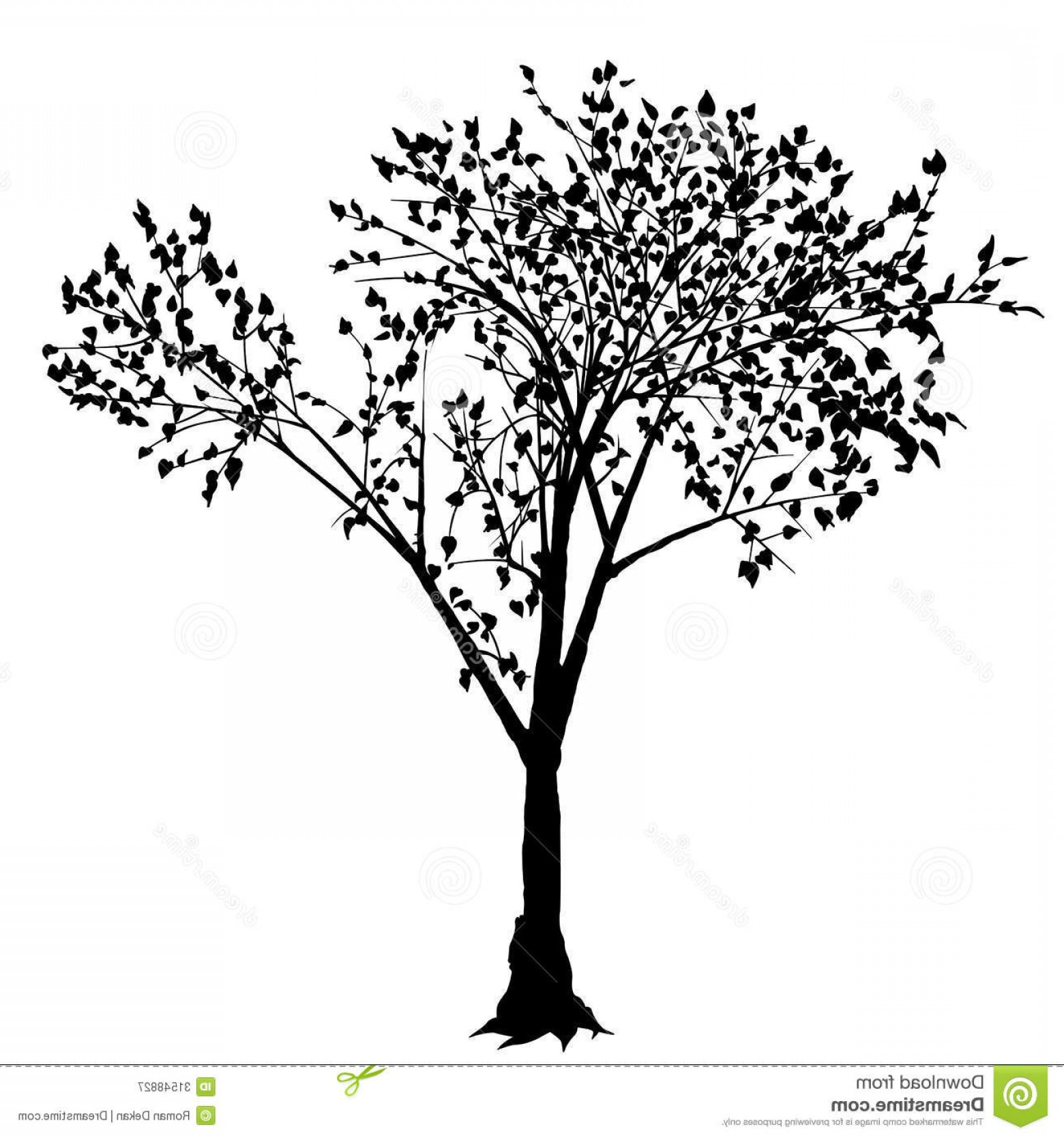 1560x1668 Royalty Free Stock Photography Tree Silhouette Deciduous Black