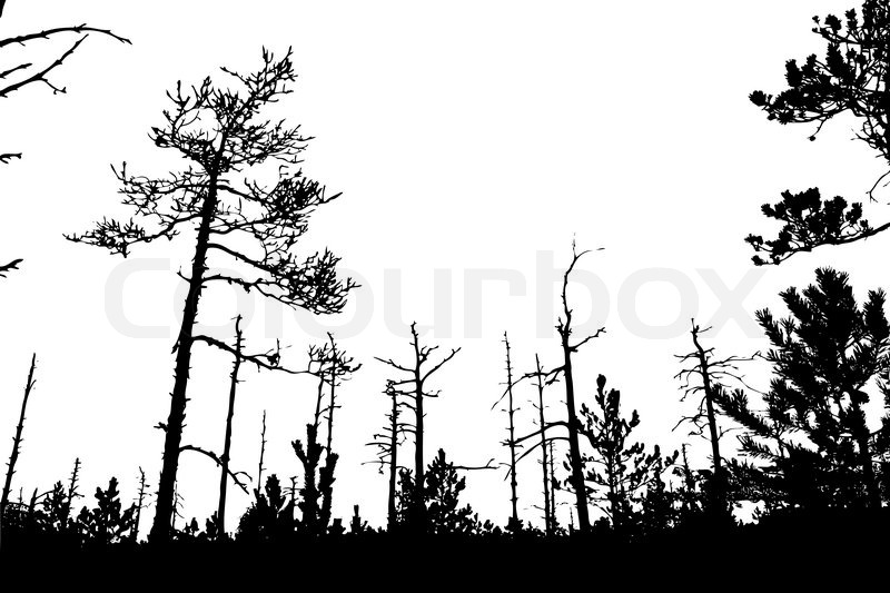 800x533 Tree Silhouette On White Background, Vector Illustration Stock