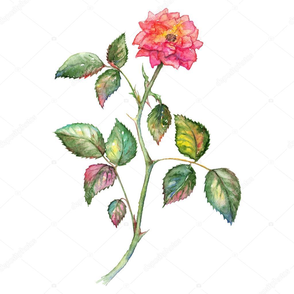 1024x1024 Shrub Clipart Watercolor