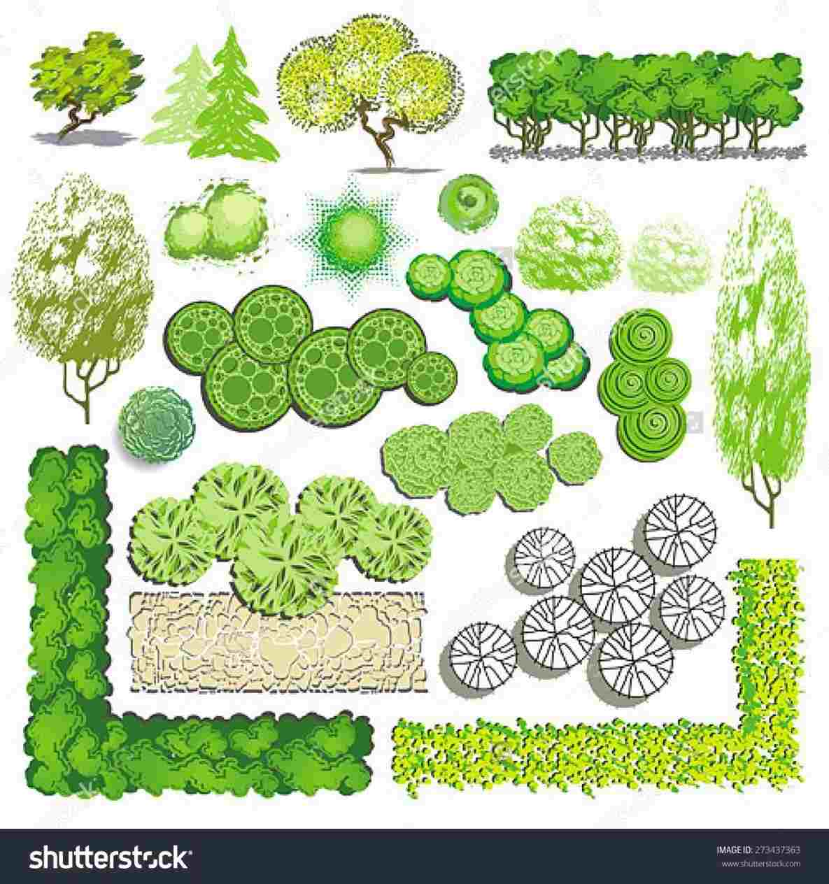 1185x1264 Plant Rhclipgoocom Tree Tree Plan View Vector Plan Stock Photos