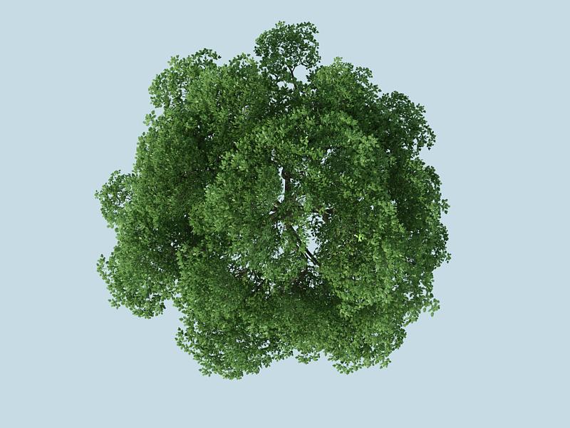 Tree Plan View Vector