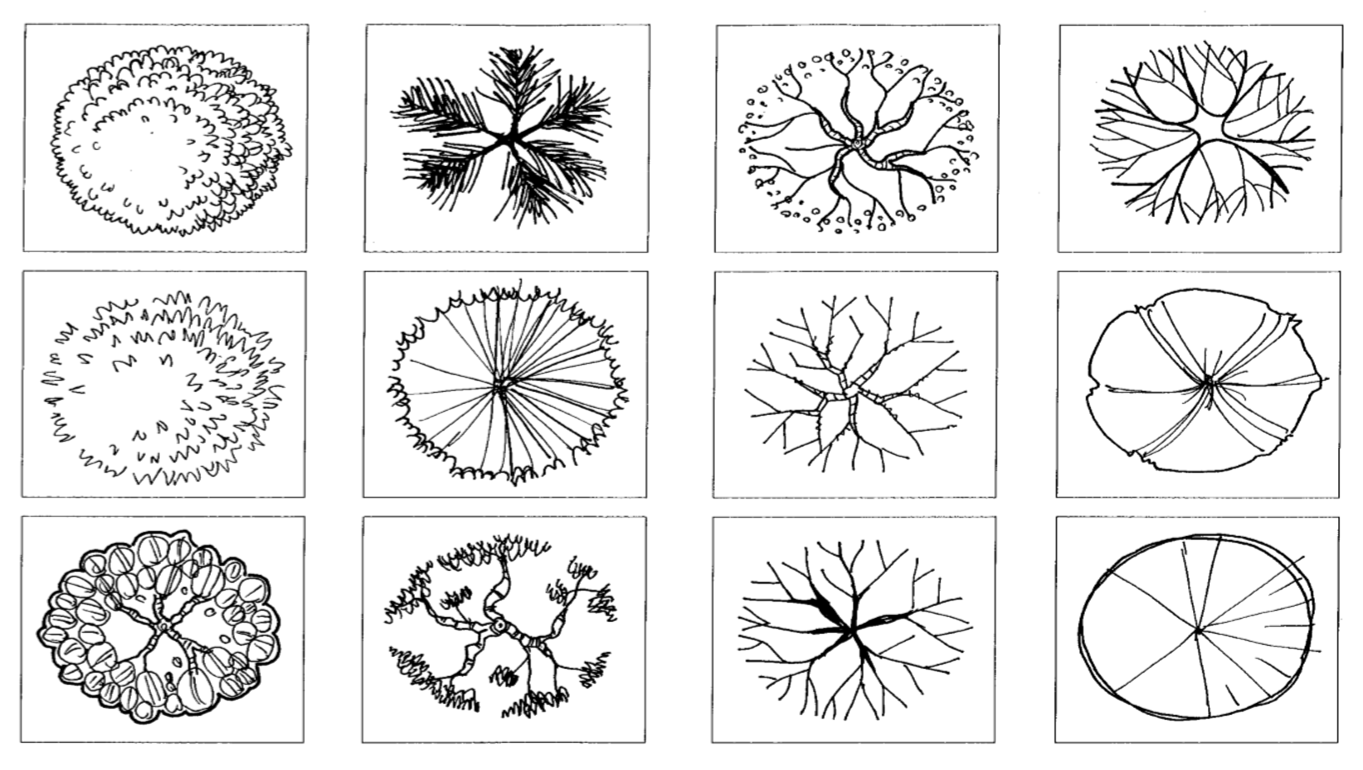 1363x770 Trees Symbols In Plan Lucy Nicholls Landscape Architecture