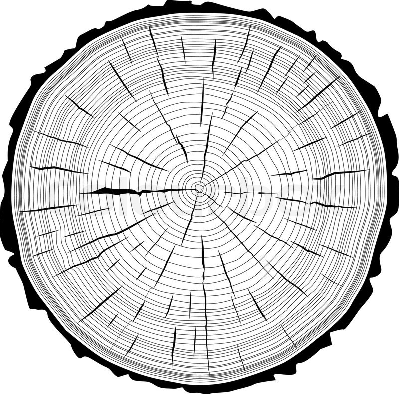 800x790 Tree Rings Saw Cut Tree Trunk Background. Vector Illustration