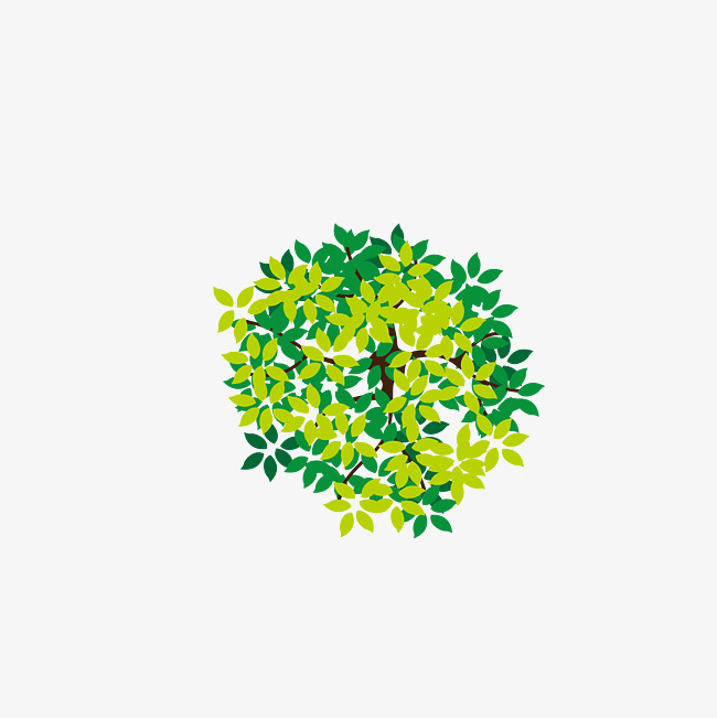 650x651 Lush Tree Top, Tree Vector, Tree Clipart, Vector Diagram Png And