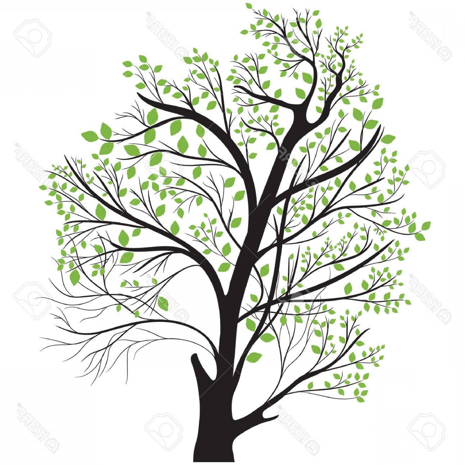 1560x1560 Photostock Vector Tree Top With Green Leaves Orangiausa