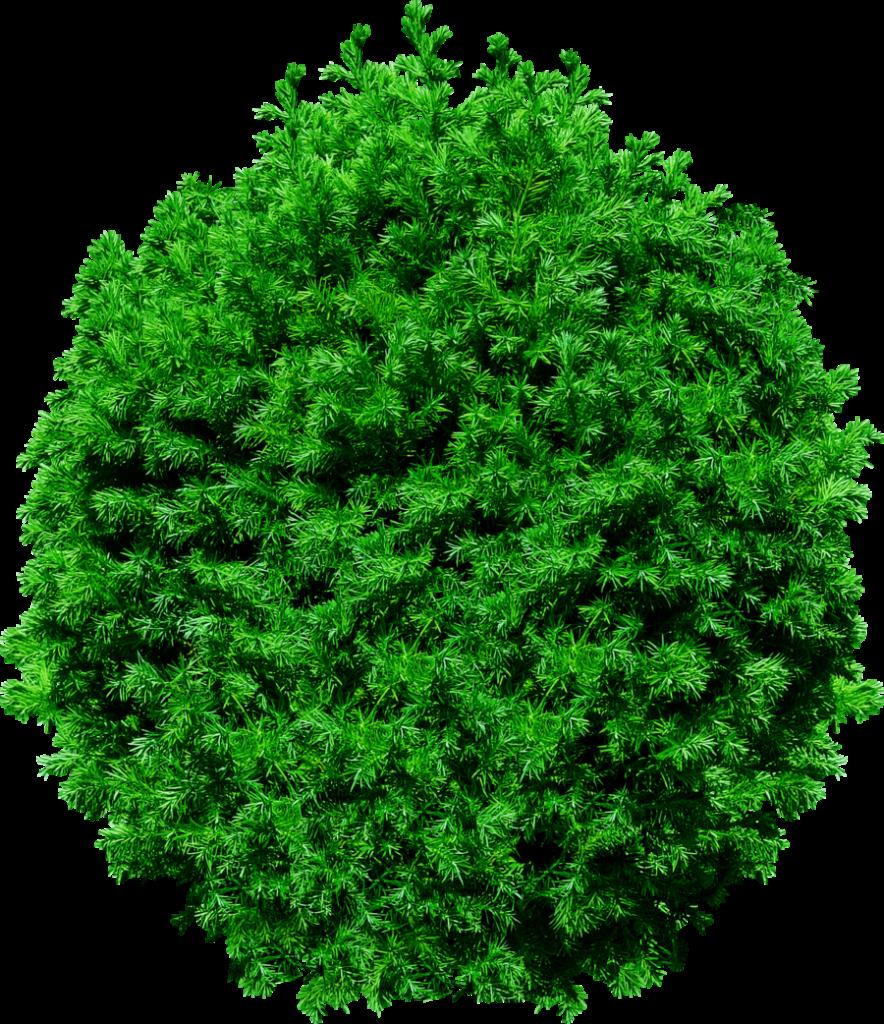 884x1024 Tree Top Png Transparent Image