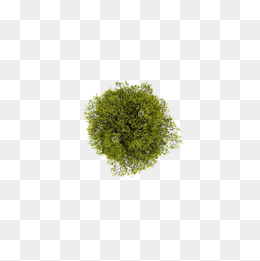 260x261 Tree Top Png, Vectors, Psd, And Clipart For Free Download Pngtree