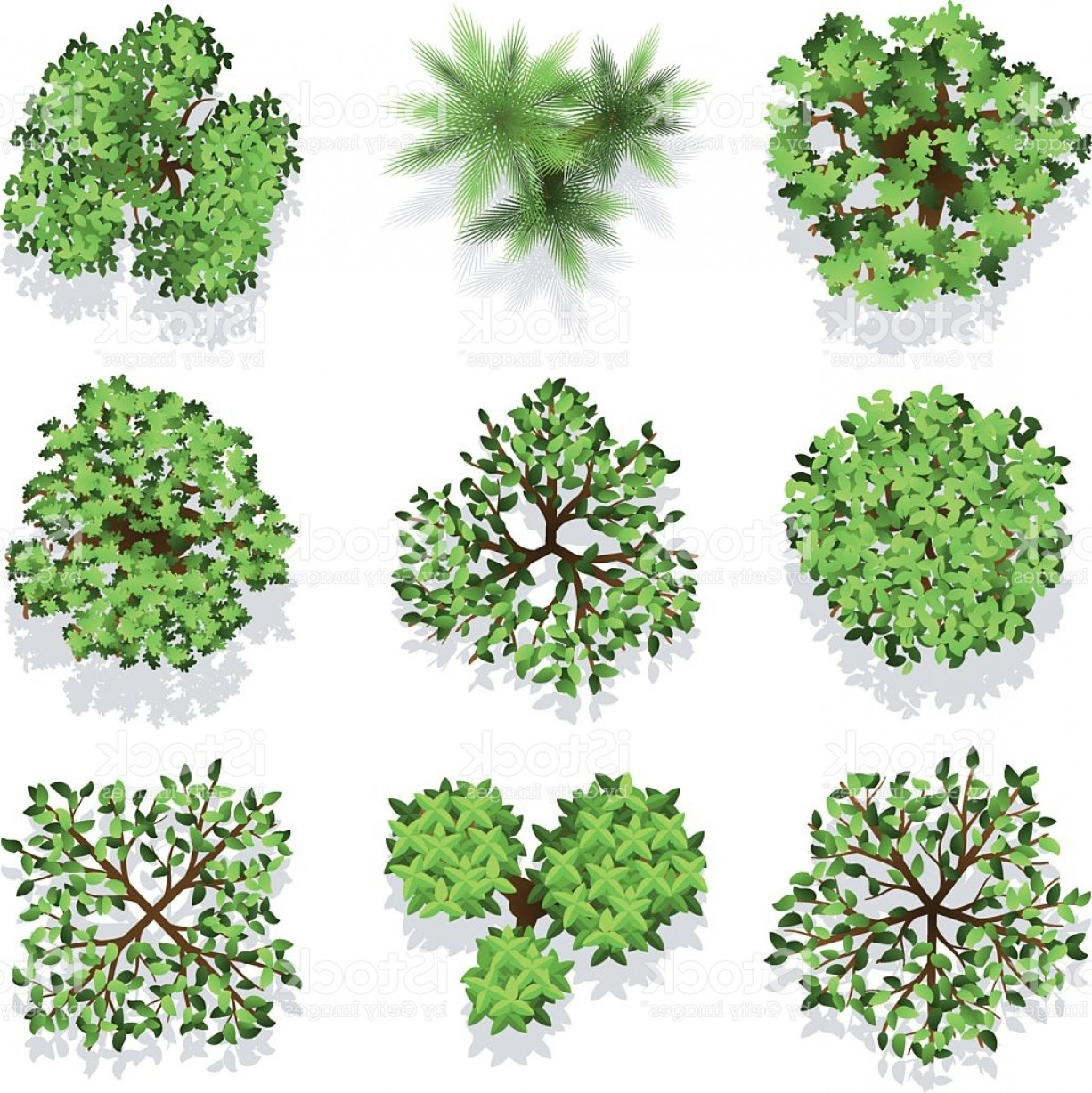 1226x1228 Trees Top View Vector Set For Landscape Design And Map Gm