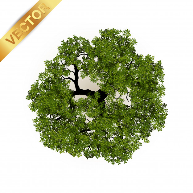 626x626 Trees Top View For Landscape Vector Premium Download
