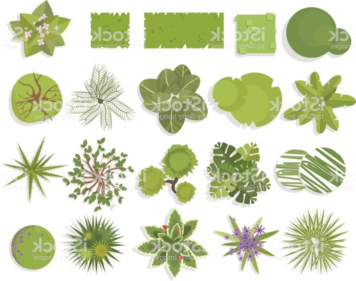 1228x970 Trees Top View Different Trees Plants Vector Set For Architectural