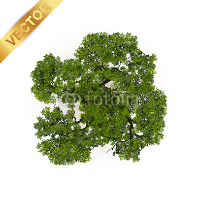 400x400 Trees Top View For Landscape Vector Illustration. Buy Photos