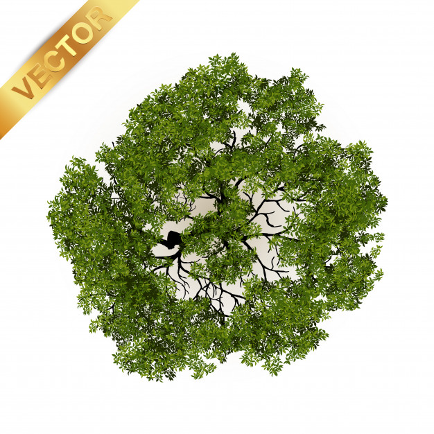 626x626 Trees Top View For Landscape Vector Illustration. Vector Premium