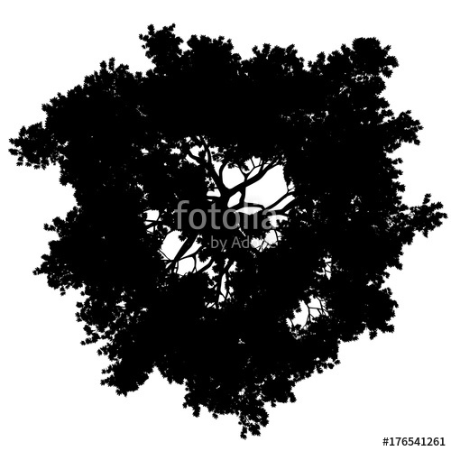 500x500 Tree Top View Silhouette Isolated