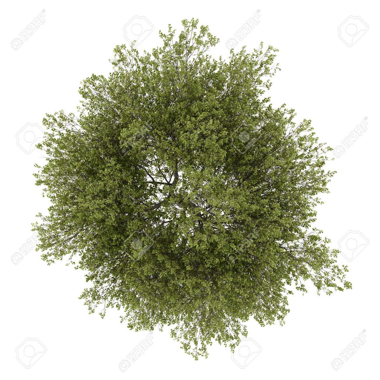 1300x1300 Tree Top View Vector Png